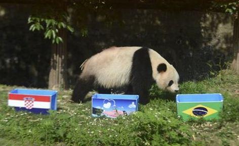 PANDA Τα μεγαλόσωμα ζώα θα επέλεγαν την τροφή τους από καλάθια τα οποία θα ήταν ντυμένα με τις σημαίες των εθνικών ομάδων που αγωνίζονται. Το καλάθι που θα επέλεγαν θα έδειχνε και τον νικητή   (Φωτογραφία:  Reuters )