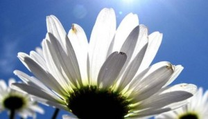 λουλουδι - ανοιξη