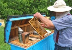 μελισσοκομεια