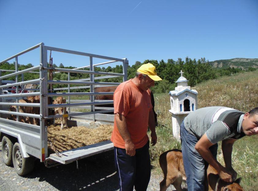 νικος κτηνοτροφοι 1