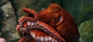 otopus-708