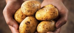 patata-alles-xriseis-708