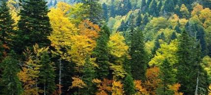 dasos δασος