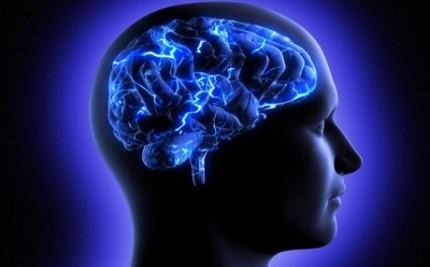 brain_2014_9_24_10_29_43_b2