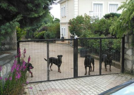 σκυλια κοζανη