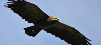 eagle-19-11-708