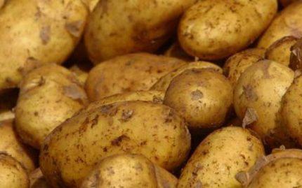 patata22-medium