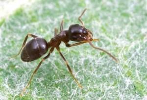 μυρμηγκια