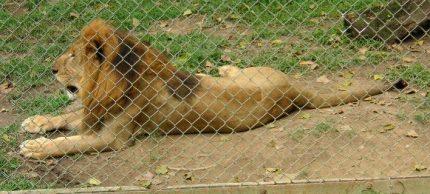 zoo-caracas-708